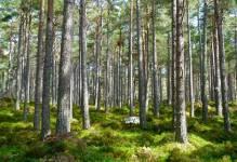 Komisja za odrzuceniem projektu PO dot. gruntów Lasów Państwowych pod inwestycje publiczne